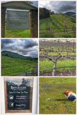 Benzinger Winery, Glen Ellen, CA