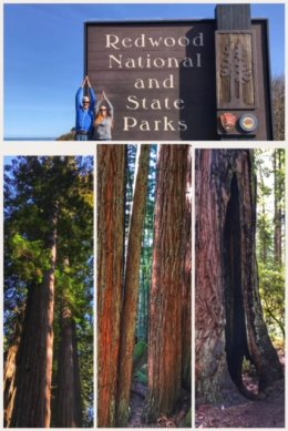 Redwood National Park collage