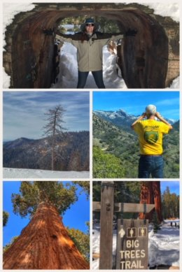 Sequoia National Park pictures
