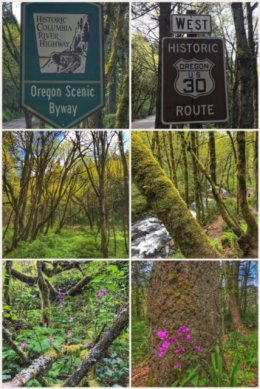 Columbia River Oregon Scenic Byway