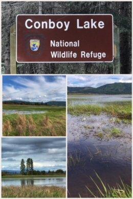 Conboy Lake NWR