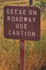 Geese on Roadway Sign