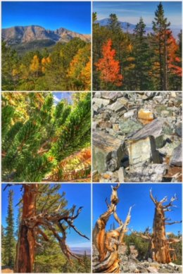 Great Basin National Park collage