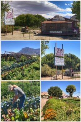 Mesa Farm Market