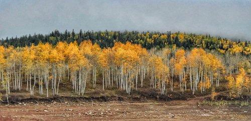 Autumn Aspens, Kolob Reservoir, UT