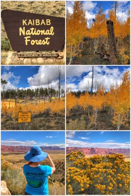 Autumn leaves, Kaibab National Forest