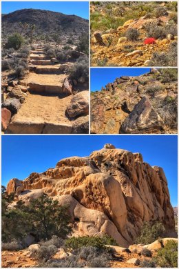Ryan Mountain Hike, Joshua Tree National Park