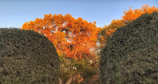 Trees in Temecula