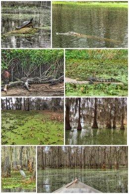 Lake Martin, Louisiana