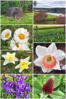 Mississippi spring flowers