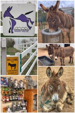 Longhopes Donkey Shelter