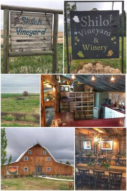 Shiloh Vineyard & Winery