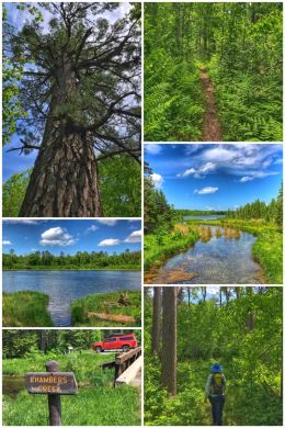 Itasca Sate Park Wilderness Drive