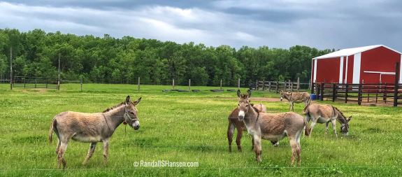Wisconsin Donkeys