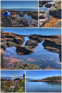 Acadia National Park, Ship Harbor Trail