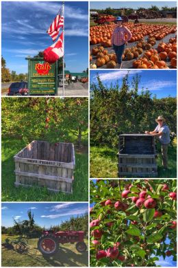 Rulfs Orchard
