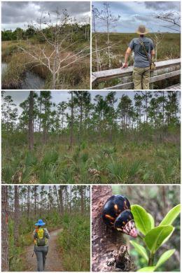 Everglades National Park - Pinelands