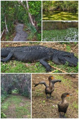 Everglades National Park, Royal Palm