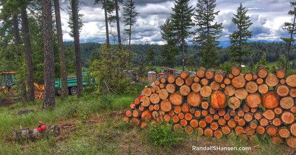 firewood rounds