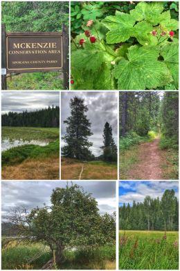 McKenzie Conservation Area